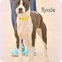 Adopt A Pet :: Roxie - Wymore, NE