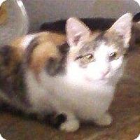 Adopt A Pet :: Chelsea - Bear, DE