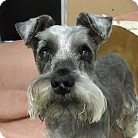 Adopt A Pet :: Buttons - San Francisco, CA