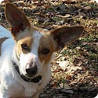 Adopt A Pet :: Little Foot - Thomasville, NC