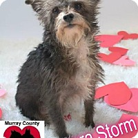 Terrier (Unknown Type, Medium) Mix Dog for adoption in Crandall, Georgia - Aurora Storm