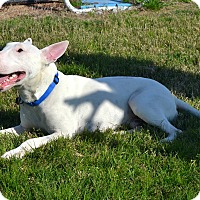 Adopt A Pet :: Jesse - Houston, TX