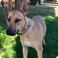 Adopt A Pet :: Kona - Stamford, CT