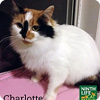 Adopt A Pet :: Charlotte - Oakville, ON