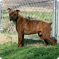 Adopt A Pet :: Boondocks - Austin, TX