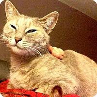 Adopt A Pet :: Mitzy - Marina del Rey, CA