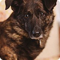 Adopt A Pet :: Zillah - Portland, OR