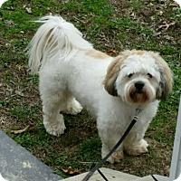 Adopt A Pet :: Benji - Hillsboro, IL