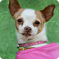 Adopt A Pet :: Millie - Westminster, MD