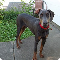 Adopt A Pet :: Sherman - New Richmond, OH