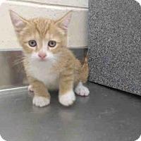 Adopt A Pet :: *SULLIVAN - Orlando, FL