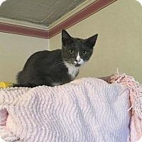 Adopt A Pet :: Peppo - Putnam, CT