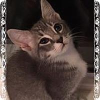 Adopt A Pet :: Gigi - Tega Cay, SC