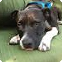 Adopt A Pet :: Courtesy Listing - Kenny - Beverly Hills, CA