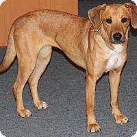 Adopt A Pet :: TIGGER - West Milford, NJ