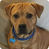 Adopt A Pet :: Milo - Raritan, NJ