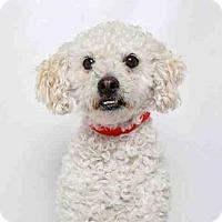 Adopt A Pet :: BISKE - Murray, UT