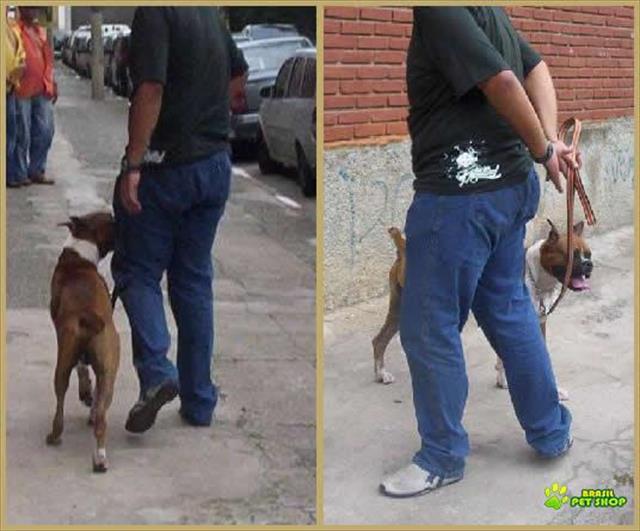 Adestramento De Cães A Domicilio Tatuapé