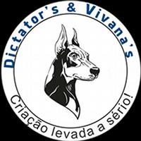Dobermann linhagem lex luther e criptonite - canil vivanas