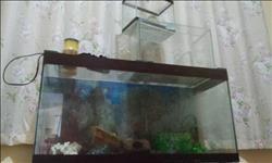 Pacotão 3 aquarios