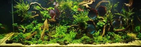 Montagem / manutenção de aquarios plantados em geral