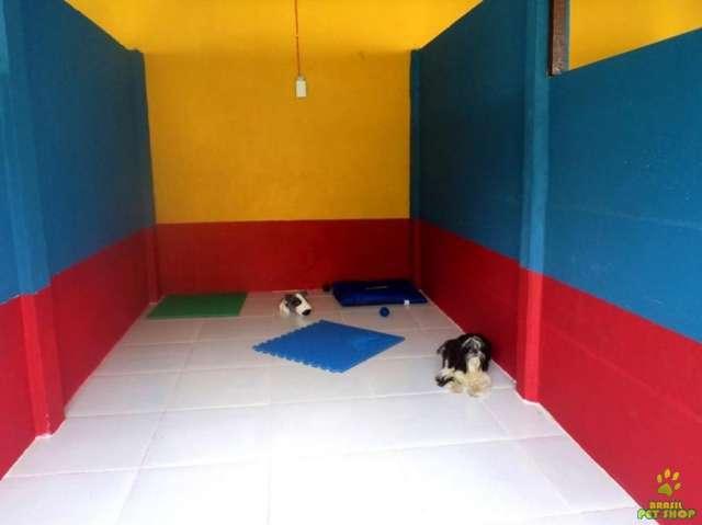 Hotel para cães salvador / lauro de freitas / bahia
