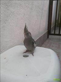 Hospedagem De Aves