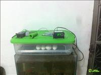 Chocadeira 20 A 30 Ovos Viragem Automatica Digital  C/ovoscopio Rj