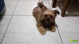 Cachorro Fema 2 Meses