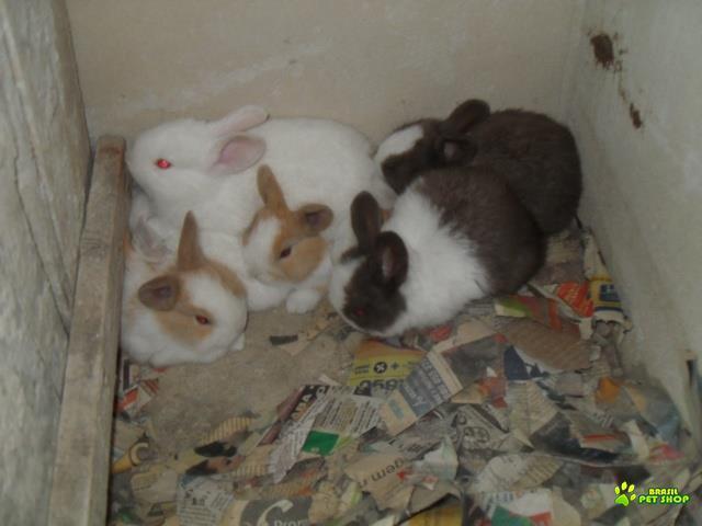 Filhotes de coelho