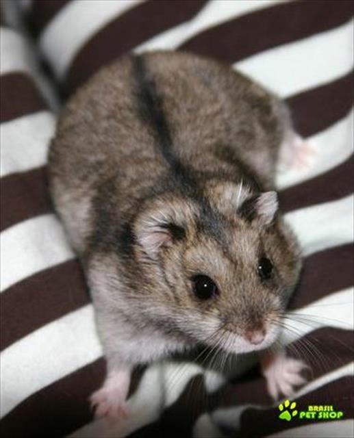 Criatório Super Mouse