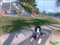Adestramento De Cães Metodo Rapido