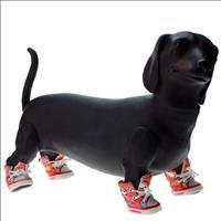 Tênis Chalesco para Cães - Laranja Tênis Chalesco para Cães Laranja - Tam 4