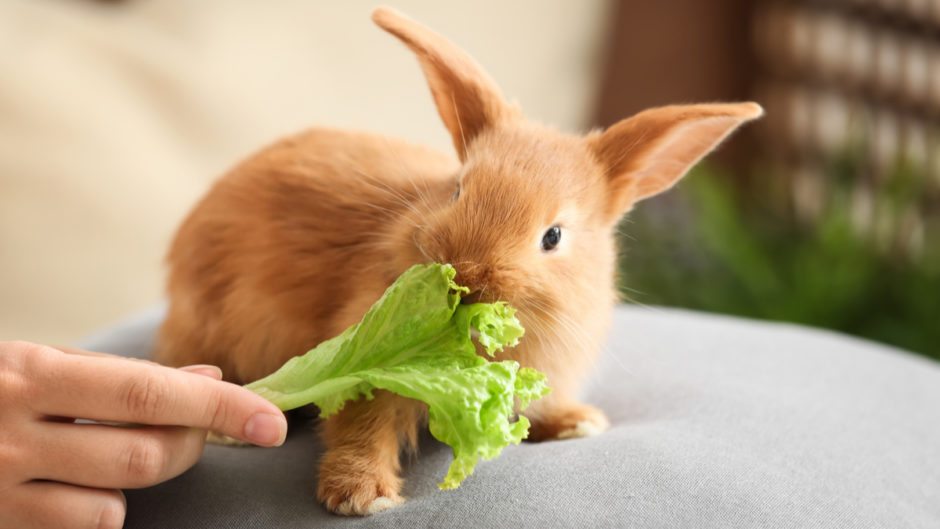 Understand How Rabbits Eat - Pet Central by Chewy