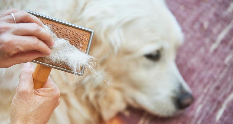 Old Dog Losing Hair
