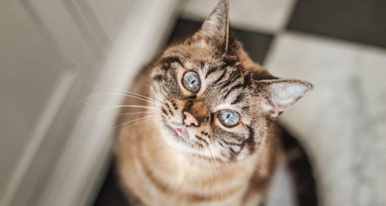 bringing home a senior cat