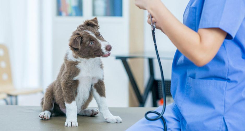 puppy's first vet visit