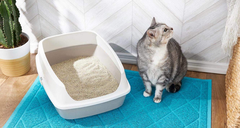 senior cat not using litter box