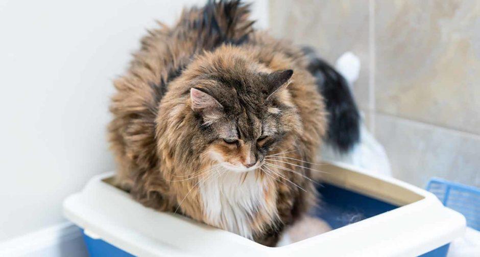 old cat diarrhea