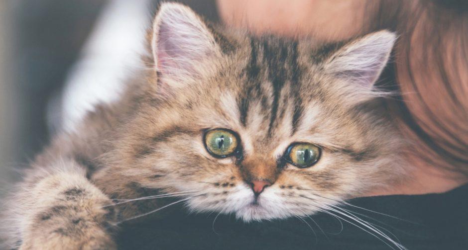 kitten diarrhea