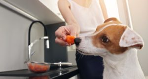 veggies safe for dogs