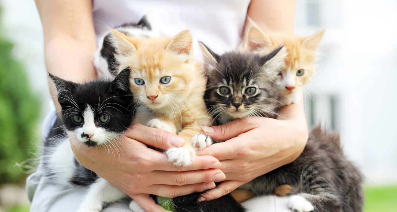 when can kittens be adopted