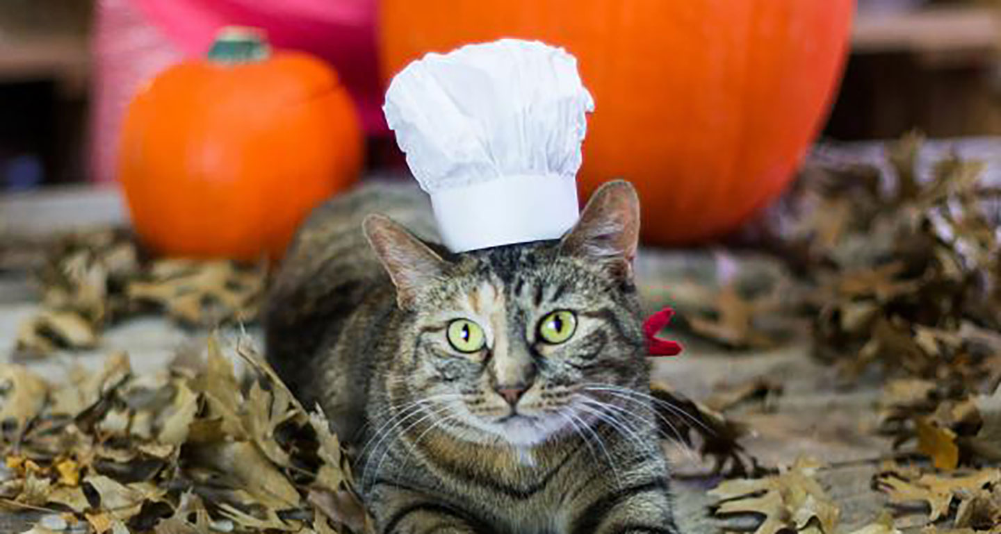 DIY cat costume - cat chef