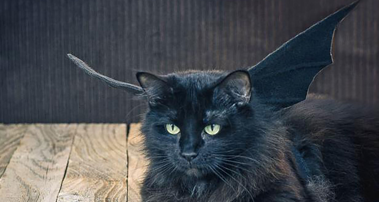 DIY cat costume - bat cat