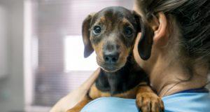 puppy deworming