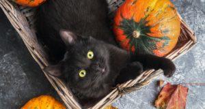 cat pumpkin treats