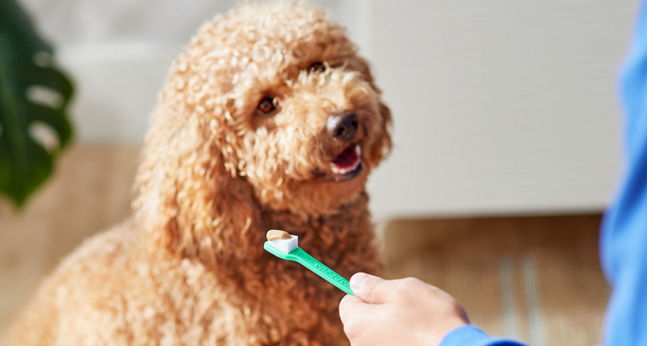 Dog dental care - dog toothbrush