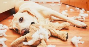 5 Reasons Your Dog Destroys His Toys