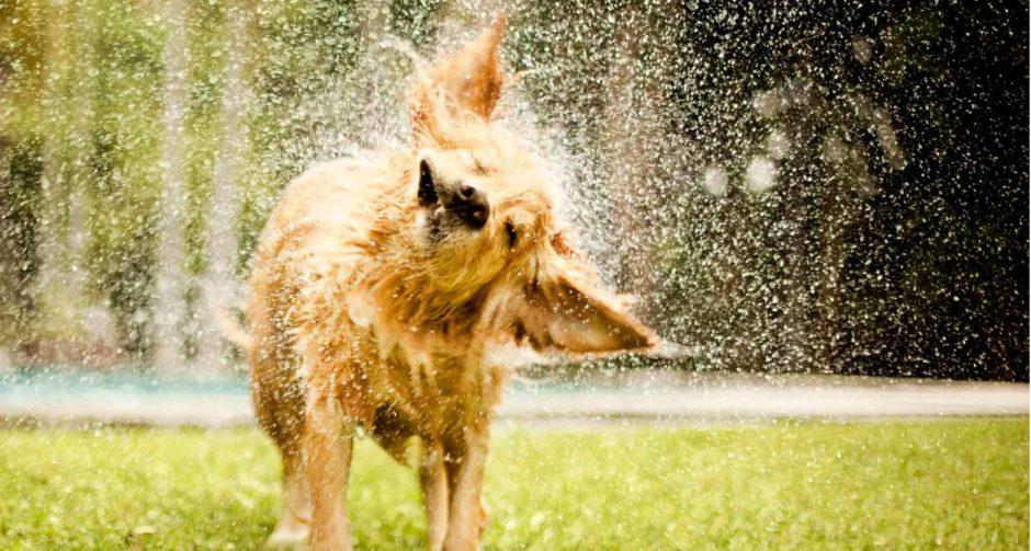 wet dog smell