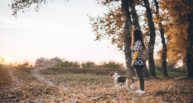 dog-friendly destinations for fall